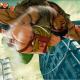 Street Fighter V – March Update Details Video